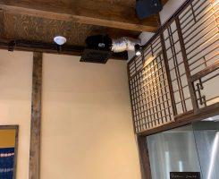 「みんなでつくる滋賀県安心・安全店舗認証制度」の現地調査に立ち会い